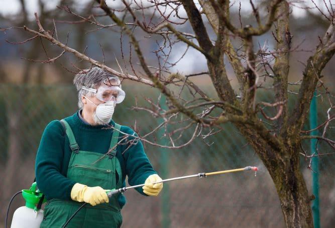 Опрыскивание - один из способов профилактики и защиты от насекомых-вредителей