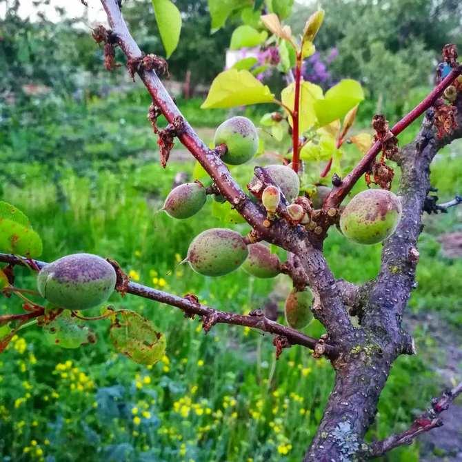Чаще всего минилиоз появляется весной