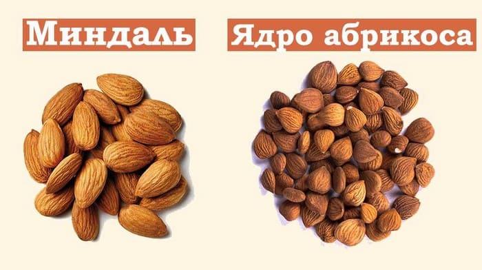 Отличие миндаля от абрикосовой косточки