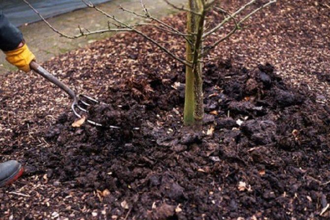 Не стоит пренебрегать рыхлением почвы под деревом