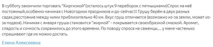 Сорт груши Киргизская зимняя