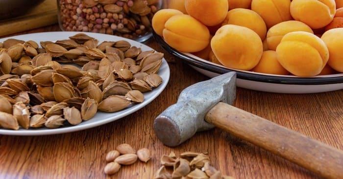 Чистка абрикосовых косточек