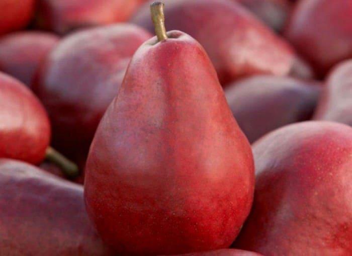 Плод груши Старкримсон
