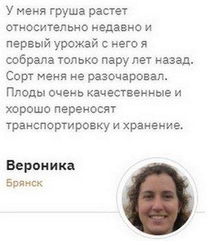 Груша Золотоворотская - обзор сорта