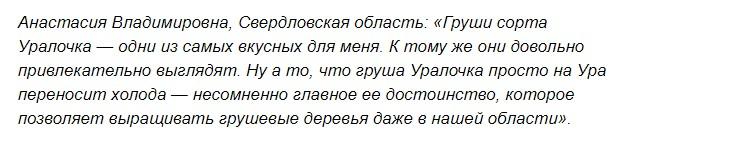 Особенности ухода за грушей Уралочка