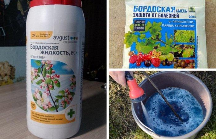 Для борьбы с насекомыми и болезнями садоводы рекомендуют фунгициды