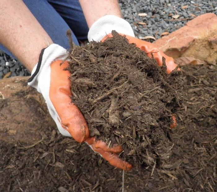 Для защиты корневой системы от морозов почву мульчируют перегноем