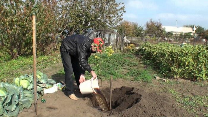 Правильный выбор места для посадки груши позволят получать высокие урожаи