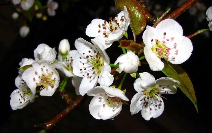 Цветение дерева оценивается как позднее