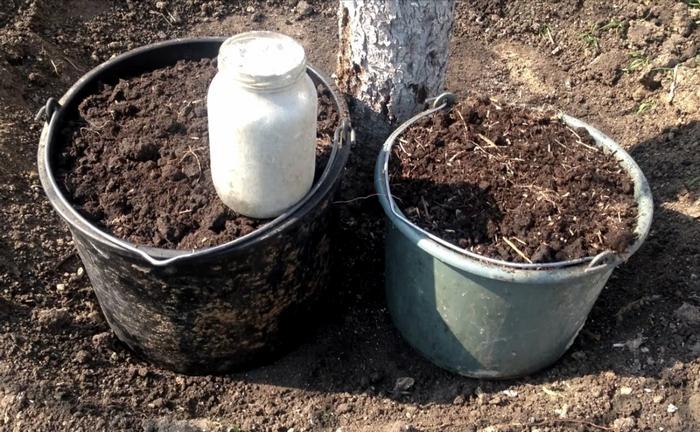 Удобряют груши только два раза за весь вегетационный период