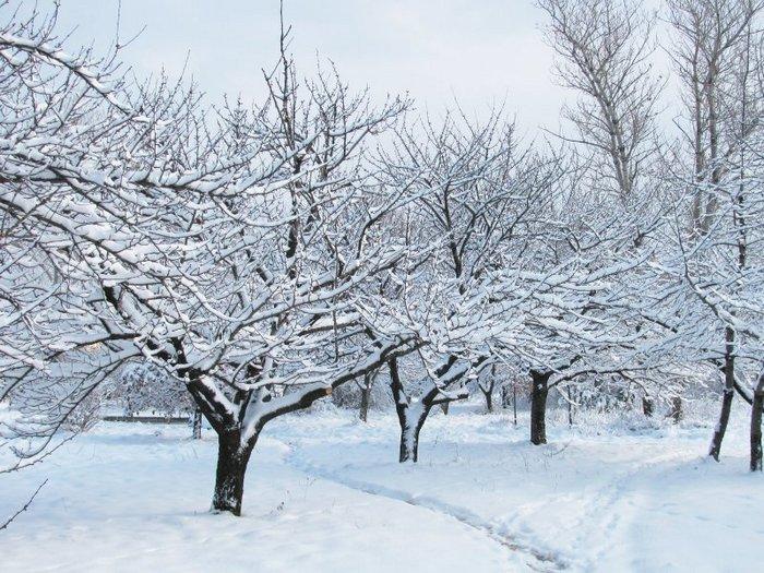 В защитных мерах по утеплению дерево не нуждается