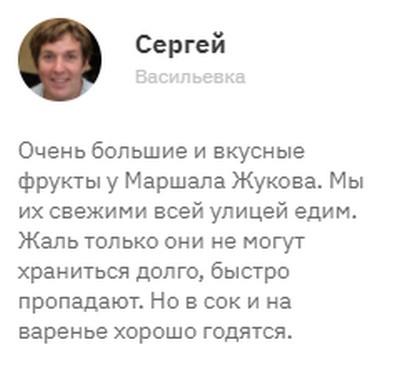 Груша Жуковская - посадка и уход