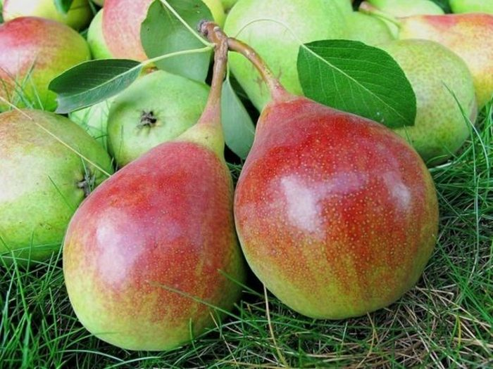 Большую часть плода покрывает легкий румянец красноватого оттенка