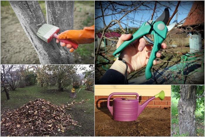 Груша Перун нуждается в поливе, подкормках и обрезке ветвей