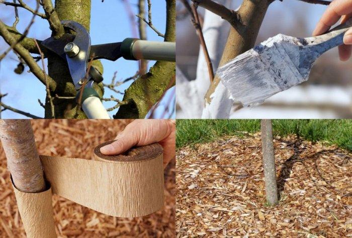 Необходимый уход очень важен для правильного развития дерева