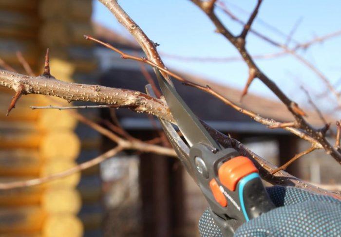 Обрезка дерева – это необходимая процедура