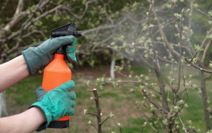 От грибков дерево защищают обработкой пестицидами