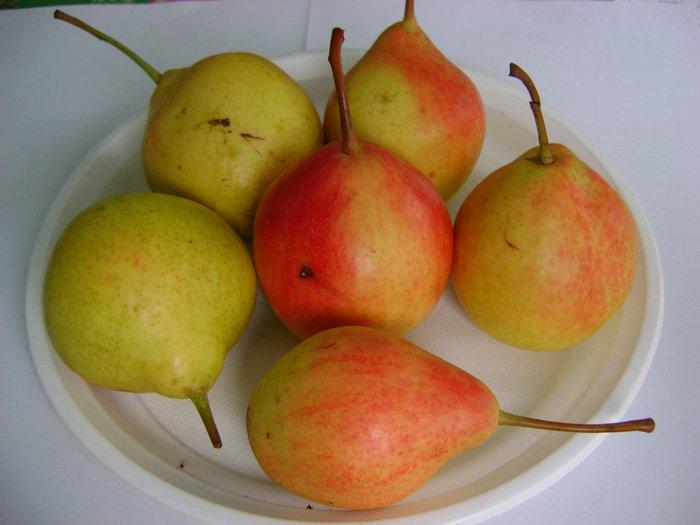 Плоды поспевают в конце августа — середине сентября