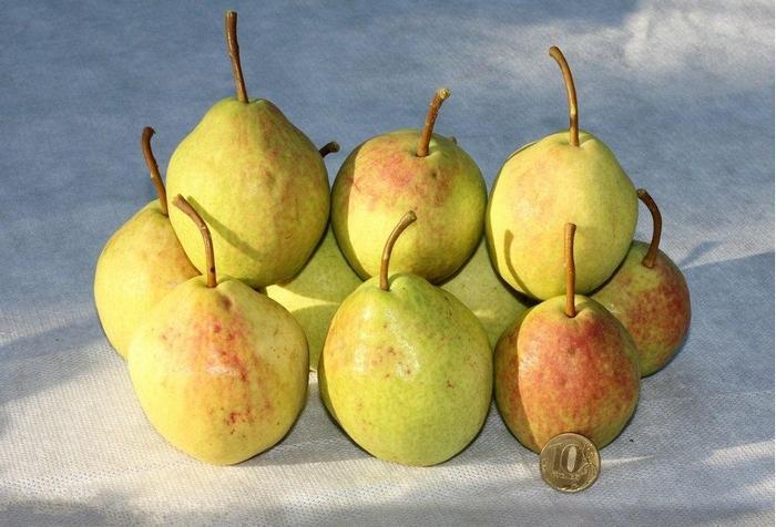 Плоды среднего размера, весом около 150 грамм