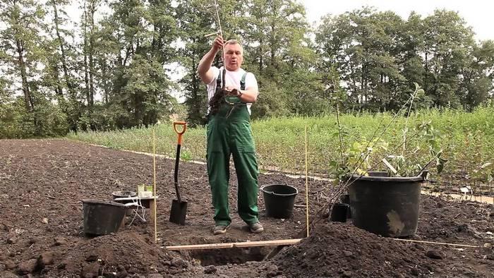 Посадочную яму готовят за 1-2 недели до предполагаемой высадки саженцев