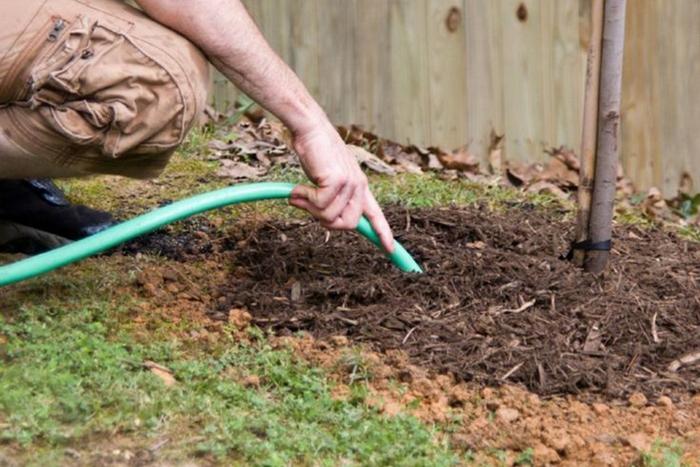 При поливе важно помнить, что потребности груши зависят от возраста