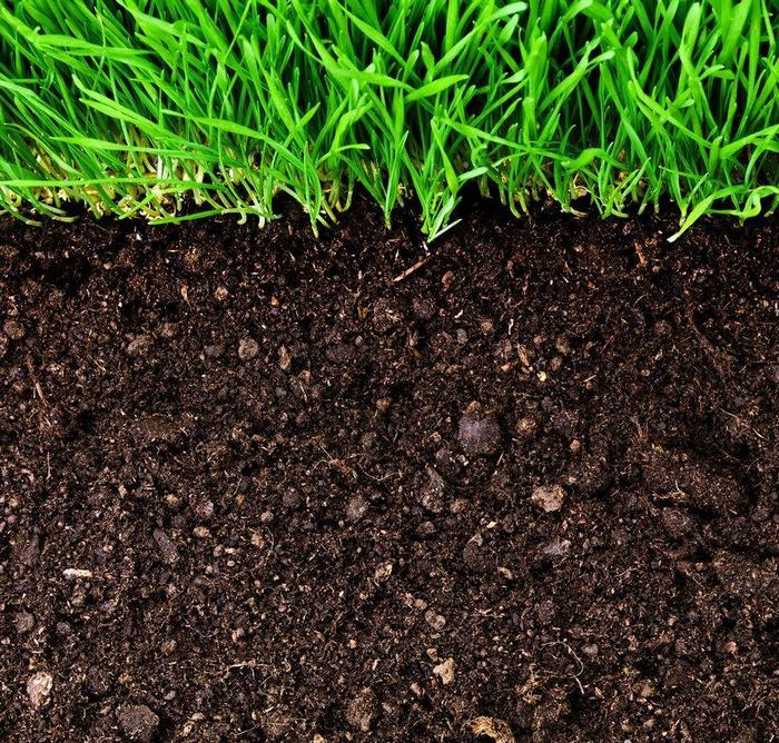Сорт любит легкие плодородные почвы