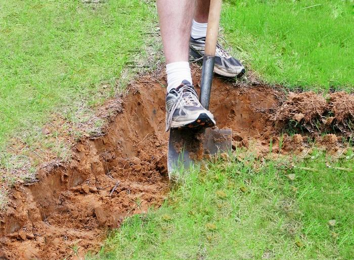 Для высадки лучше подбирать место с глинистыми и суглинистыми грунтами