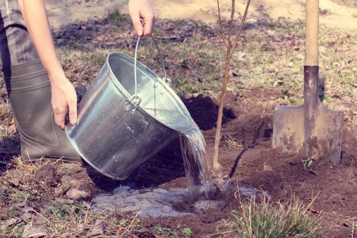Интенсивность полива зависит от среднесуточной температуры воздуха и поры года