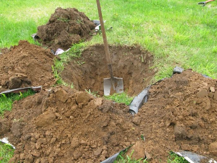 Лучшими почвами для груши являются плодородная суглинистая и чернозём
