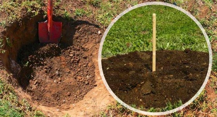 Место под грушу выбирают ещё задолго до посадки растения