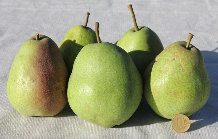 Плоды крупные - средняя масса одной груши составляет 170-270 грамм