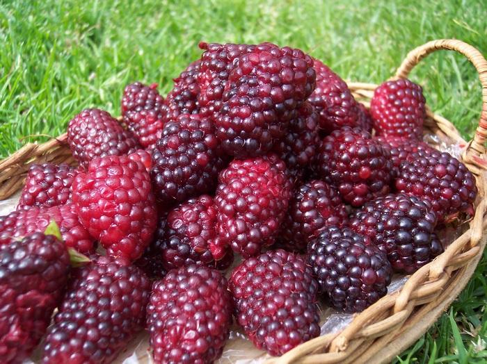 Хранить ягоды нужно в прохладном помещении