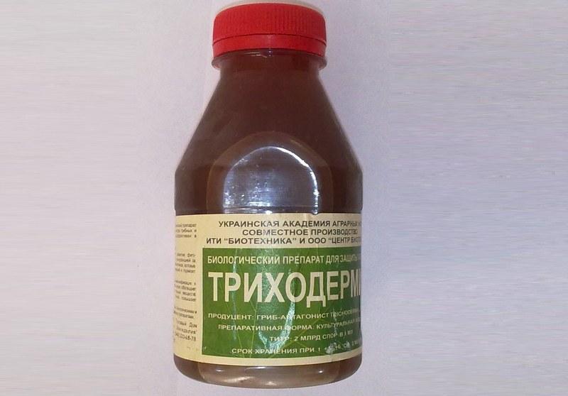 Биопрепарат Триходермин для защиты от патогенных микроорганизмов
