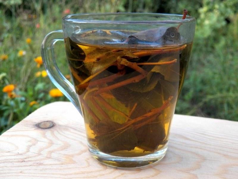 Чай из листьев и веточек груши - полезный напиток