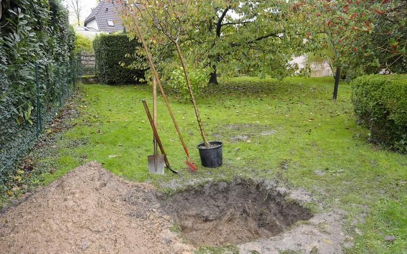 Для посадки декоративной груши следует выбрать участок плодородной земли