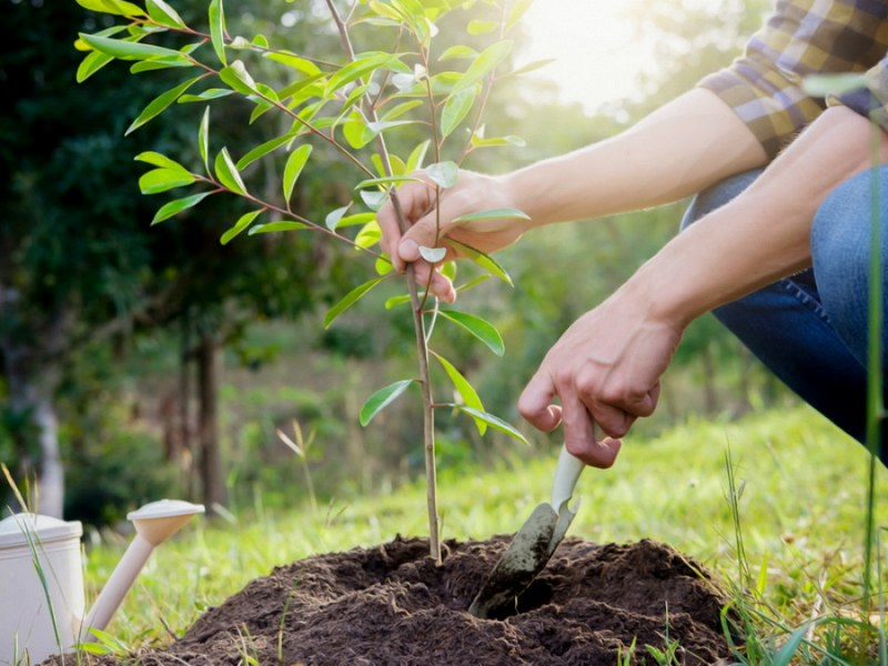 Груше сорта Форель нужна хорошо дренированная, плодородная почва