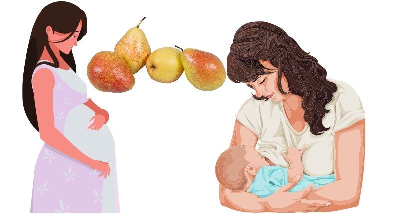 Груши сорта Форель не рекомендованы беременным и кормящим женщинам