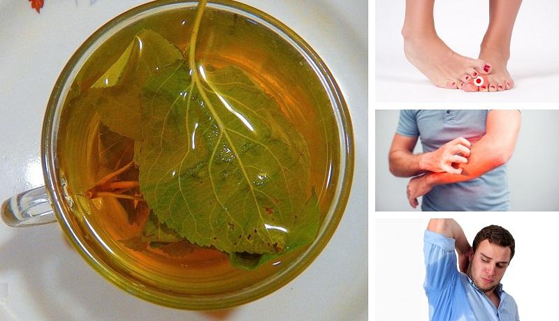 Отвар из листьев груши-дички применяют для лечения многих заболеваний