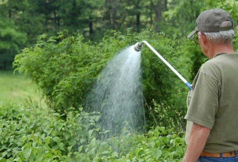 Полив малины является важным условием для обильного плодоношения