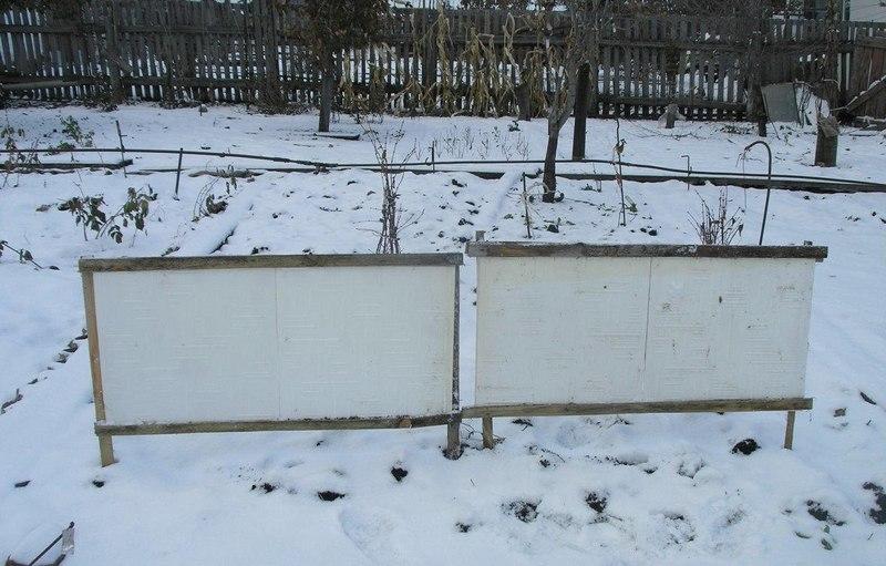 Снегозадержание благотворно влияет на рост корневой системы малины
