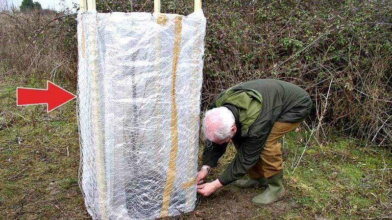 Укрытие деревьев на зиму — важное мероприятие для защиты плодовых культур от мороза
