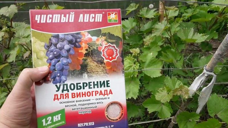 Чтобы урожай был обильным и здоровым нужно обязательно регулярно удобрять виноград