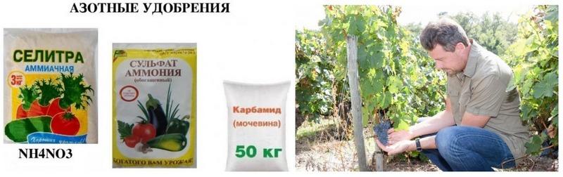 Для формирования обильного урожая винограду необходима минеральная подкормка с высоким содержанием азота