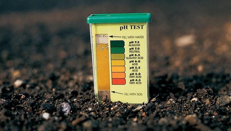 Для нормального развития винограда кислотность почвы должна находиться в пределах 5,5 pH