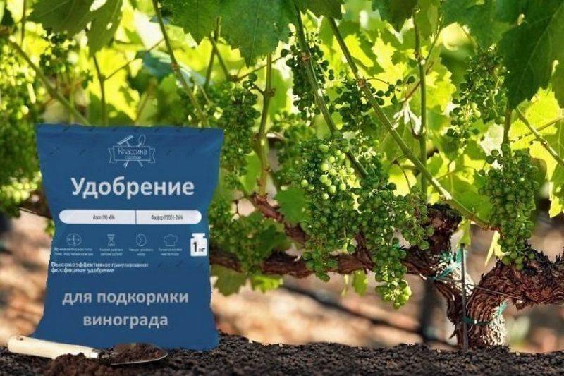 Для улучшения качества урожая винограду необходима подкормка
