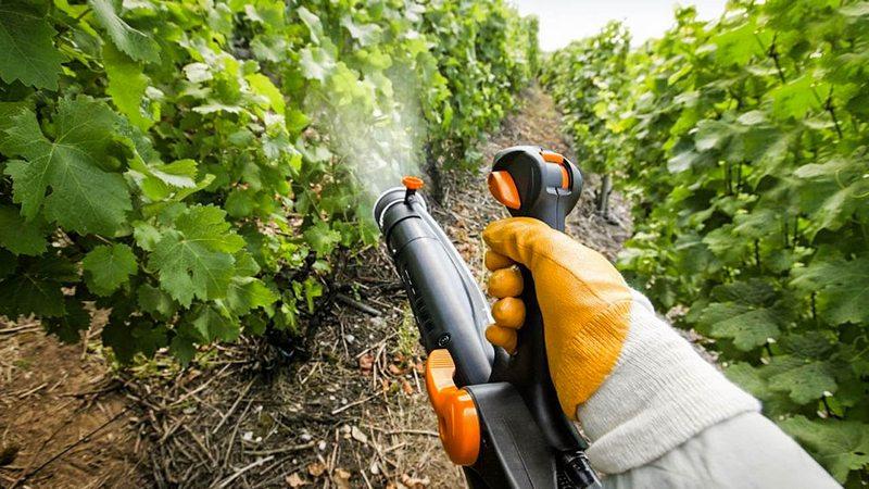 Для защиты виноградника от болезней, следует проводить комплексную обработку растения фунгицидными препаратами