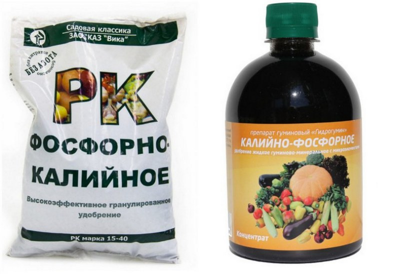 Фосфорно-калийные удобрения необходимы для формирования и созревания гроздей винограда
