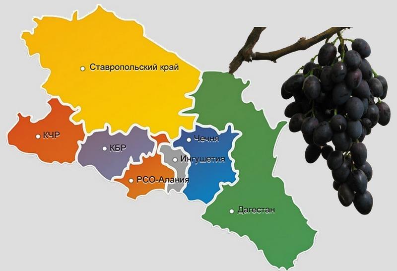 Гибрид допущен к выращиванию по Северо-Кавказскому региону