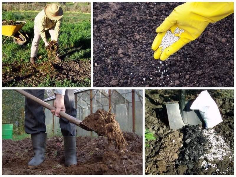 Грунт удобряют минеральными или органическими удобрениями