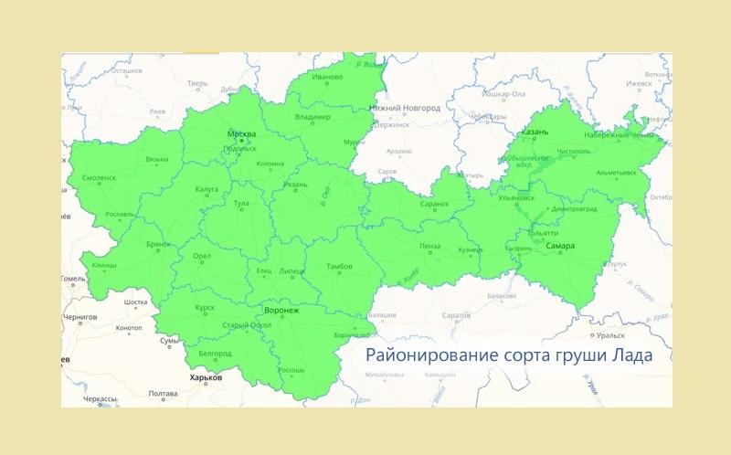 Груша районирована для выращивания сразу в нескольких регионах России